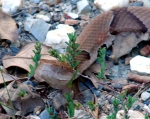 Hot Springs Mountain Road Copperhead