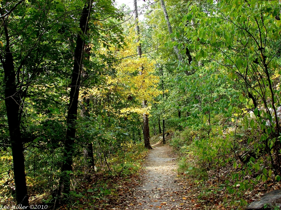Lower Dogwood Trail Autumn Leaves