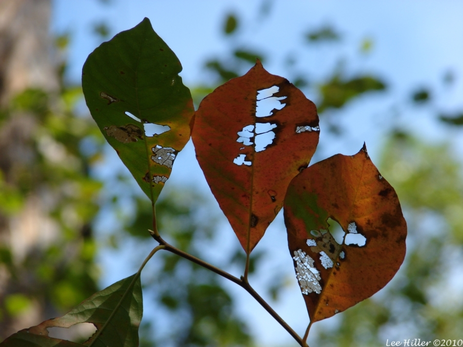 Upper Dogwood Trail Autumn Leaves