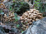 Tufa Terrace Mushroom Stack Fungi