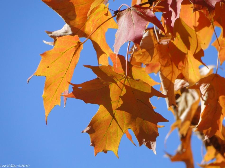 Promenade Autumn Leaves