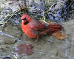 Tufa Terrace Cardinal Spa
