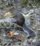 Tufa Terrace Squirrel Spa