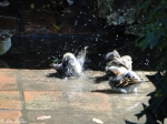 Promenade Splashing Sparrows