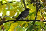 Hot Springs Mountain Trail Robin