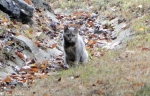 Hot Springs National Park, AR Carriage Road Feral Cat