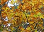Short Cut Trail Autumn Leaves