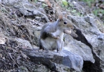 Carriage Road Squirrel