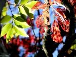 Dead Chief Trail Autumn Leaves