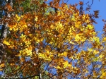 Floral Trail Autumn Leaves