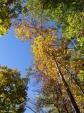 Floral Trail Autumn Trees