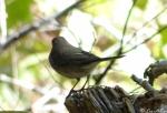 Floral Trail  Bird