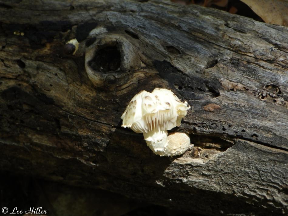 Floral Trail Fungus Log