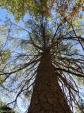 Hot Springs Mountain Trail Autumn Tree
