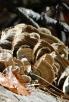 Hot Springs Mountain Trail Fungi