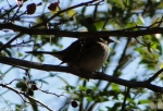 Hot Springs Mountain Trail Small Bird