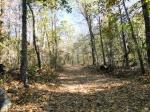 Short Cut Trail Autumn