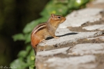 Hot Springs National Park, Arkansas Promenade Chipmunk