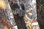 Hot Springs Mountain Trail Squirrel