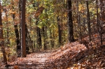 Goat Rock Trail Autumn Leaves
