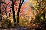 West Mountain Oak Trail Autumn
