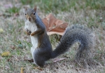 Promenade Squirrel No. 5