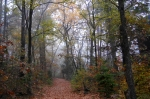 Dead Chief Trail Autumn Fog