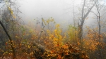 Hot Springs Mountain Trail Autumn Fog