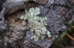 Hot Springs Mountain Trail Autumn Lichen On Wood