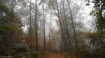 Short Cut Trail Autumn Fog