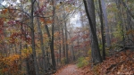 Upper Dogwood Trail Autumn Fog