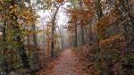 Upper Dogwood Trail Autumn Fog