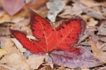 West Mountain Canyon Trail Red Leaf