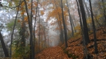 West Mountain Oak Trail Autumn Fog