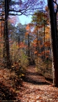 Upper Dogwood Trail Waning Autumn Forest