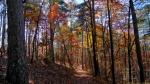 Upper Dogwood Trail Waning Autumn Forest