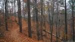 Gulpha Gorge Trail Autumn