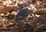 Dead Chief Trail Green Warbler