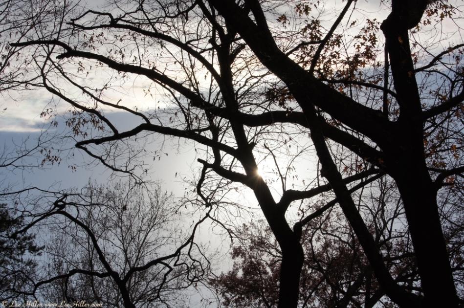Promenade Dark Trees