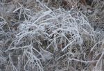 Hot Springs Cascade Frosted Grass