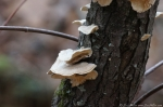 Floral Trail Tree Fungi