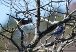 """Carriage Road Blue Jays """"The Brats"""""""