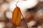 Lower Dogwood Trail Autumn Leaf