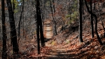 Upper Dogwoood Trail
