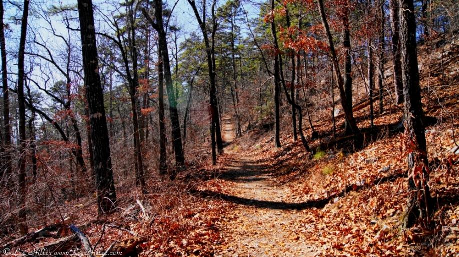 Upper Dogwood Trail