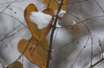 Hot Springs Mountain Trail Snowy Heart Leaves
