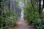 Dead Chief Trail Fog