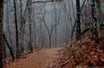 Floral Trail Fog