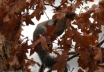 Fountain Street Squirrel