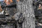 Fountain Street Squirrel